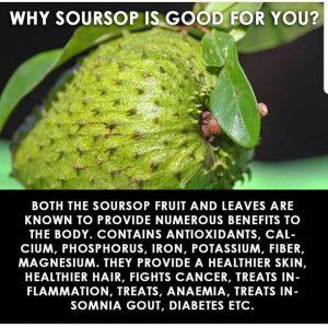 Important health benefits of Soursop